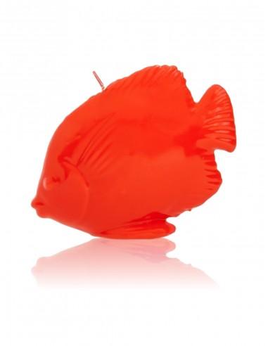 Candela Pesce Rosso